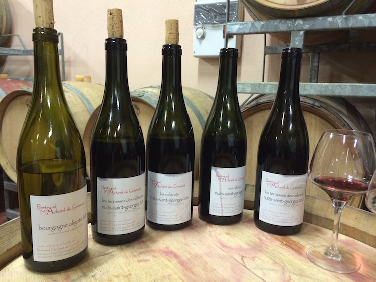 Image of Bertrand Machard de Gramont wines.