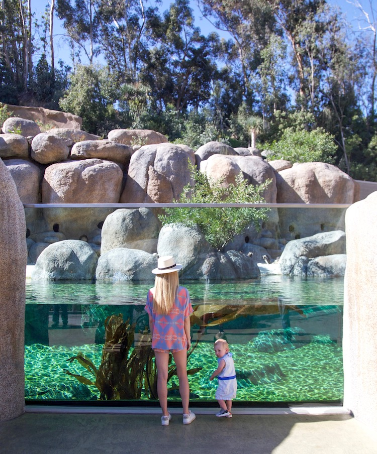 Image of Casey Hatfield-Chiotti and her son infront of the African penguin enclosure at the San Diego Zoo