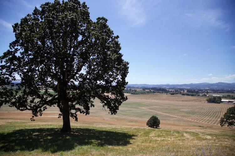 Image of the Willamette Valley wine region in Oregon